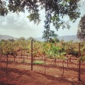 Mexico's wine country