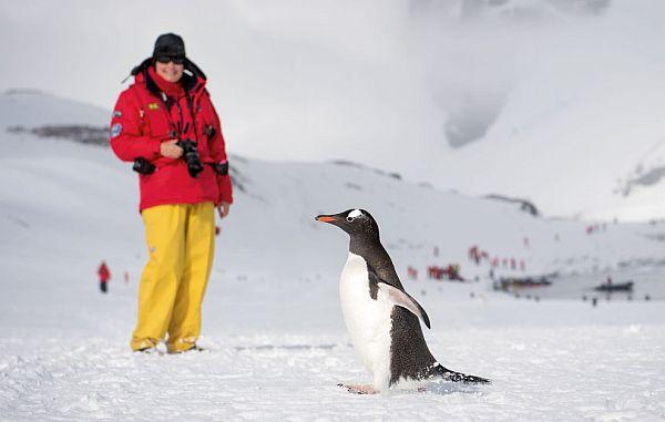 Penguin photography Antarctica cruise