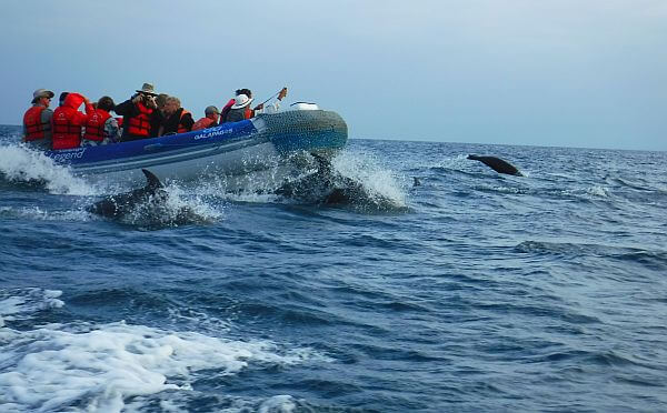 Galapagos land tours and small ship tours in Ecuador