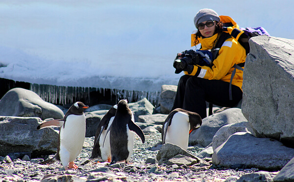 solo travel to antarctica without a single supplement