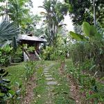 Osa Peninsula jungle lodge