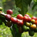 Colombia coffee triangle travel