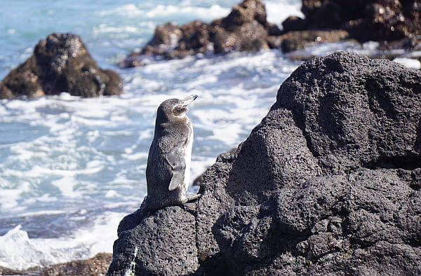 Touring the Galapagos Islands by small ship cruise