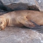 Galapagos luxury tour