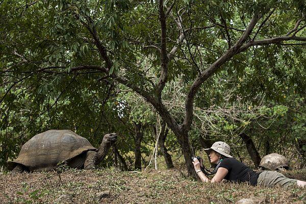 Go Galapagos tour giant tortoise