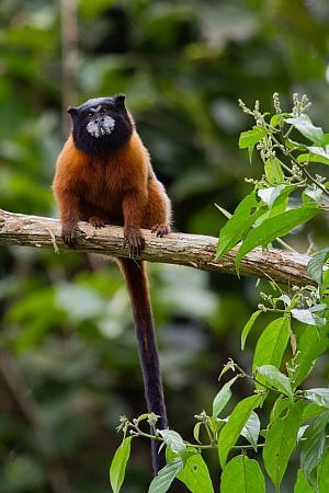 There's no shortage of animals to spot at Napo Wildlife Reserve in the Amazon Basin of Ecuador.
