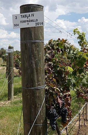 Mexican wineries near San Miguel de Allende