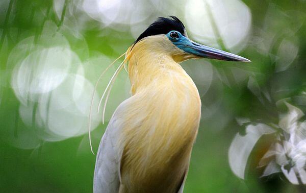birdwatching activities Yasuni National Park Napo