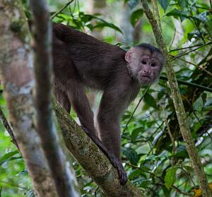 Napo Ecuador wildlife