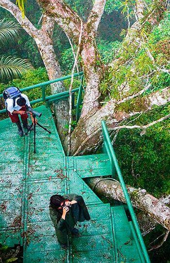 birdwatching at Napo jungle lodge