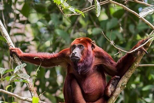 sustainable jungle lodge Ecuador