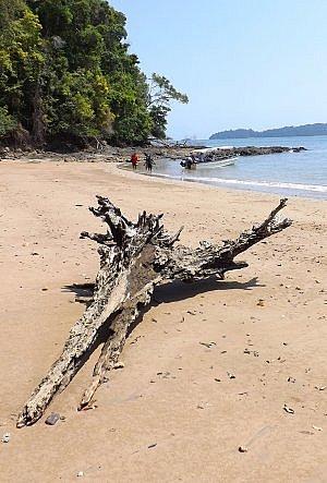 driftwood on a hidden beach off the coast of Panama