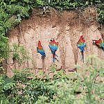 where to go in Peru including the Amazon jungle