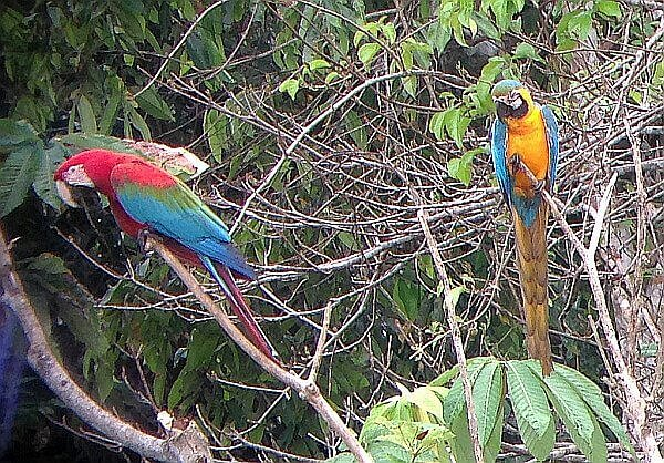 jungle tour in Peru