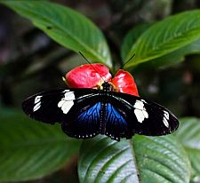 Reserva Amazonica Butterfly